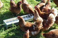 FODERTRÅG till kycklingar,höns, vaktlar,ankor
